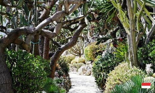 Экзотика сада Jardin в Монако
