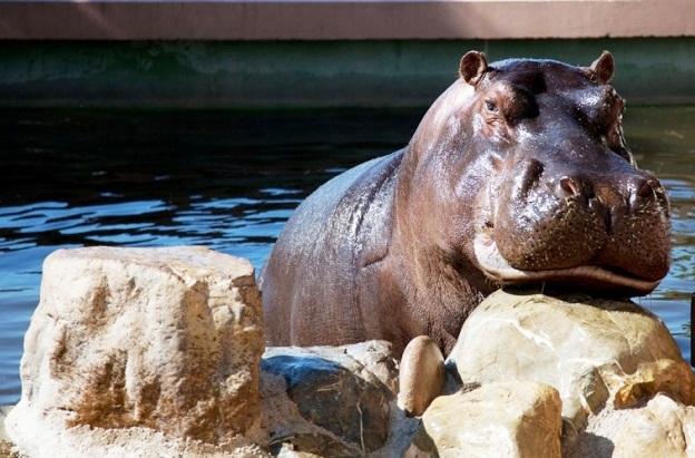 Содержание животных и зоопарка в Княжестве Монако
