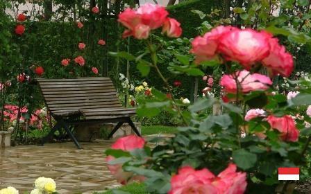 Красота розария Монако